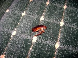 bigger-bug1
