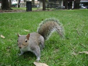 stupid-squirrel1