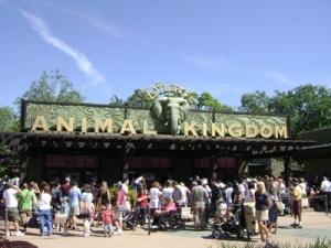 animal-kingdom-002