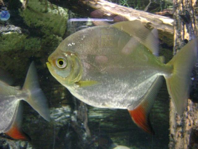 Aquarium Trip 010