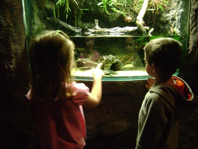 Aquarium Trip 015