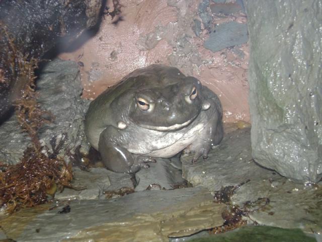 Aquarium Trip 031