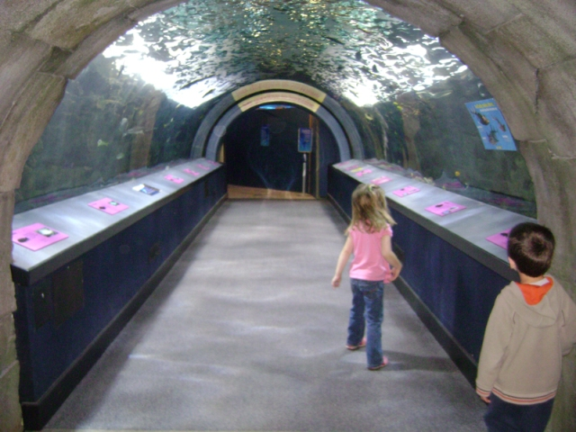 Aquarium Trip 037