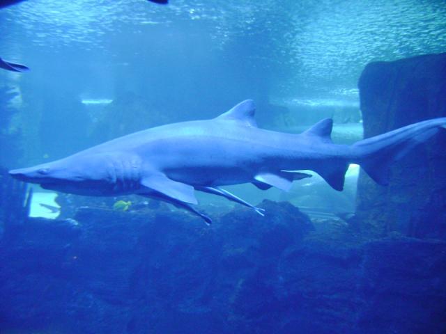 Aquarium Trip 054
